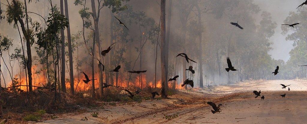 Vtáky požiar