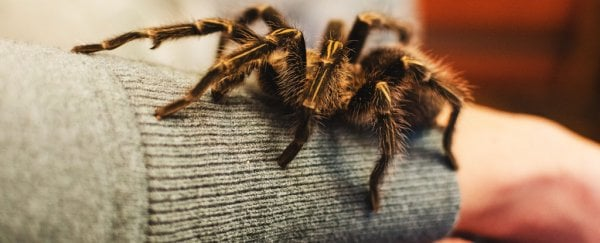 We really are born with a natural fear of spiders and snakes, new study shows
