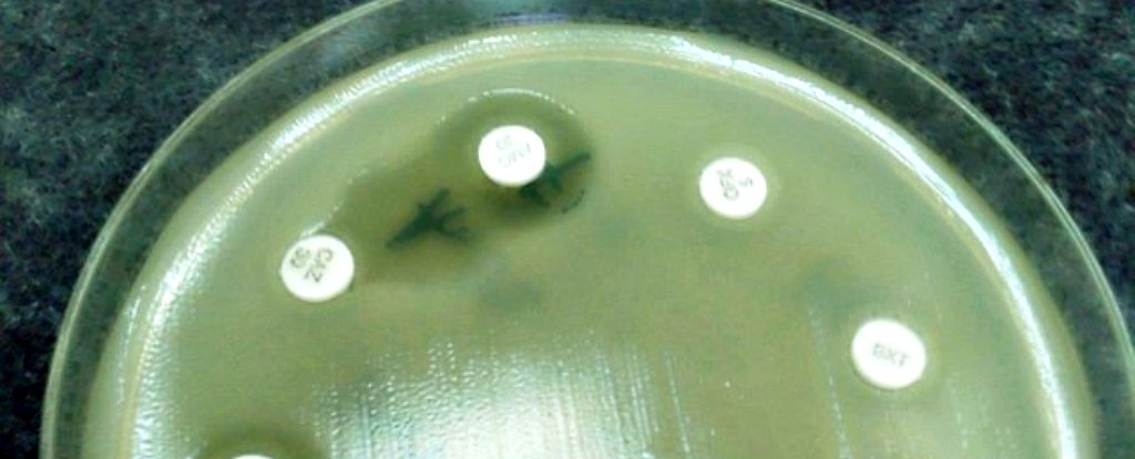 Scientists Just Announced Our Best Shot at Ending Antibiotic Resistance to Date