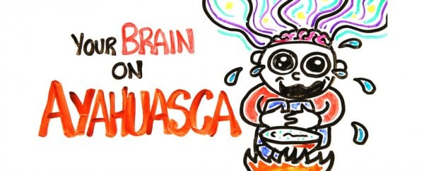 The science of the hallucinogenic drug ayahuasca