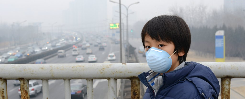 Exposure to Air Pollution Makes Rats Put on Weight, Study Finds