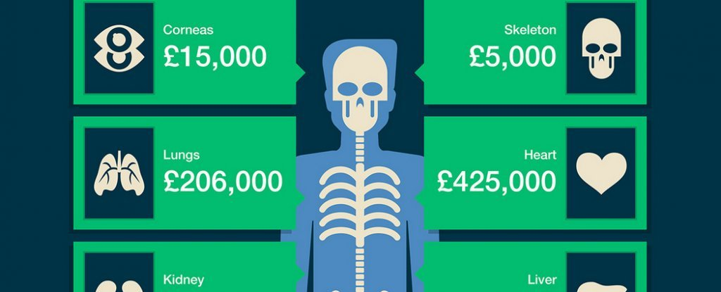 This Is How Much Your Body Is Worth - How much is the human body worth infographic