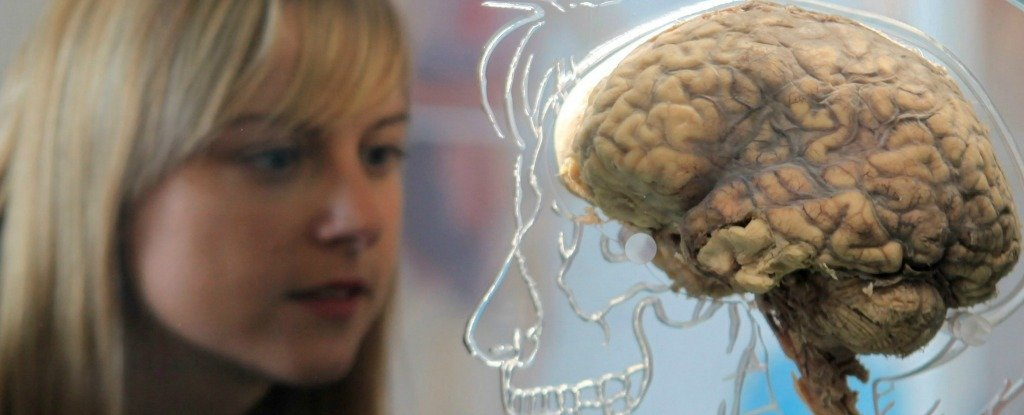 Researchers Think They Know How to Make Your Brain Learn Like a Kid Again