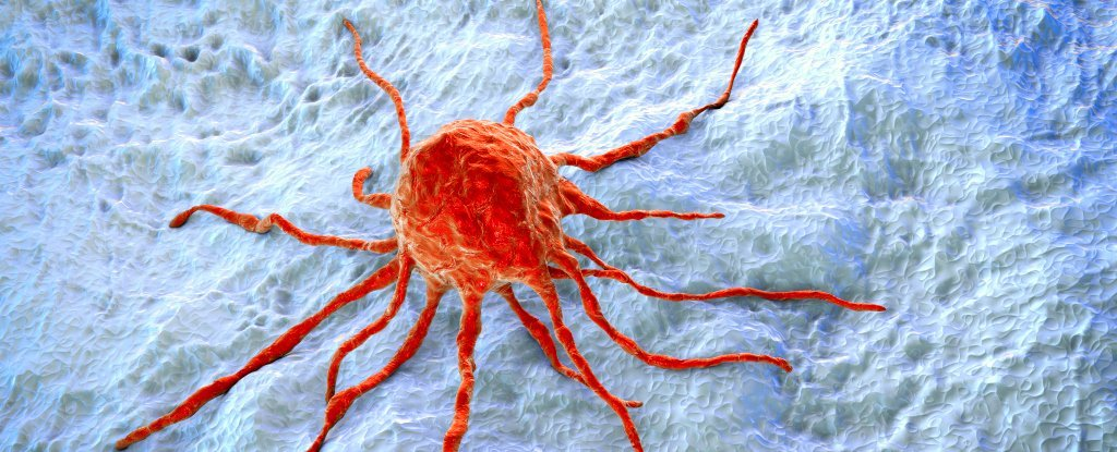 a study about cancer genes Breast cancer is a common cancer and 1 in 8 women develop it during their lifetime in the uk researchers think that around 5 to 10 out of 100 breast cancers (5 to 10%) are caused by an inherited faulty gene.
