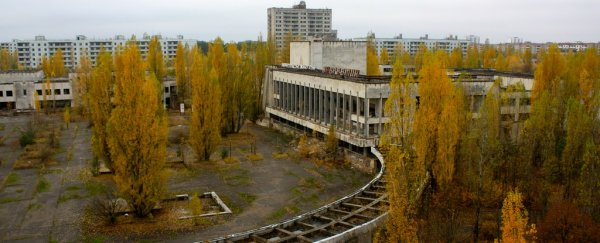 Chernobyl could soon find a second life as a giant solar farm