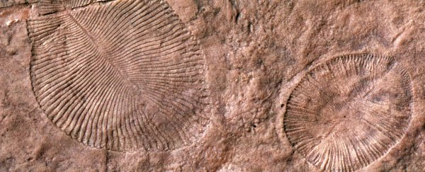Mystery fossil finally confirmed to be an animal after 70 years of research