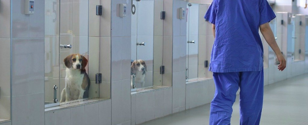 This South Korean Cloning Facility Promises to Bring Back Your Dead Dog
