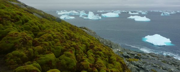 Antarctica is turning green, as climate change pushes it back in geologic time