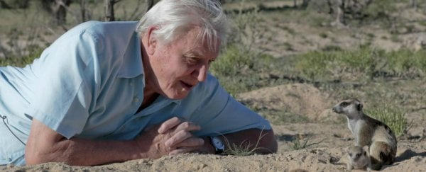 More young people are watching David Attenborough than The X Factor