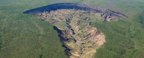 Siberia's 'doorway to the underworld' is getting so big it's uncovering ancient forests