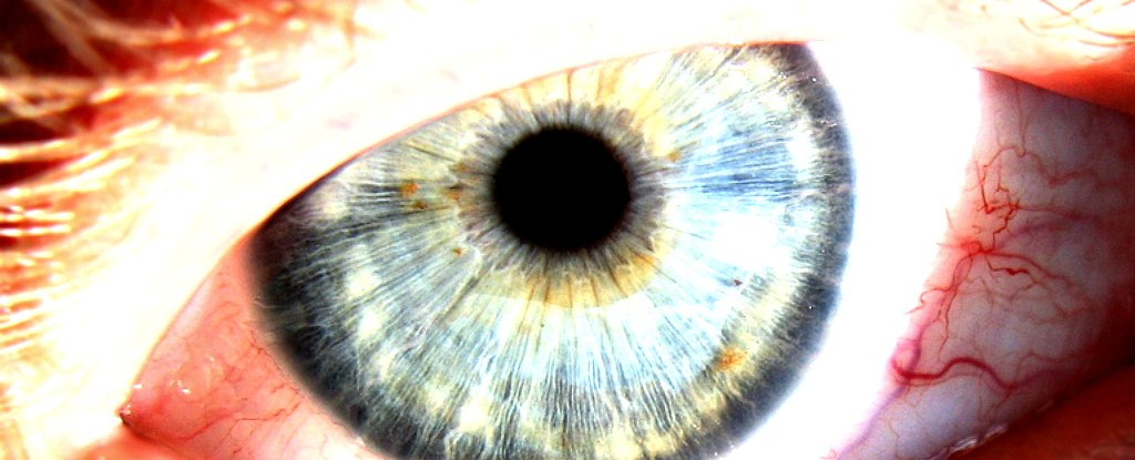 World-First Experiment Finds Our Eyes Are Capable of Detecting Individual Photons
