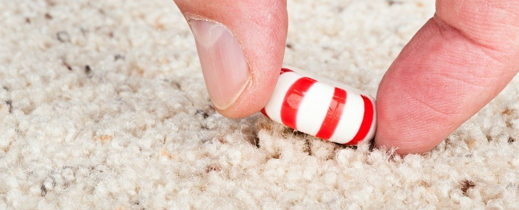 Sorry, But The 5-Second Rule Was Debunked by Science Yet Again