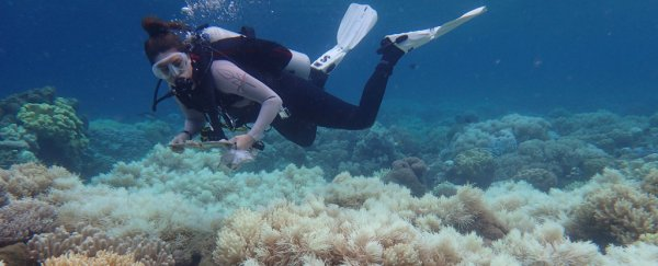 Heartbroken Scientist Admits the Great Barrier Reef is Now 'Terminal'