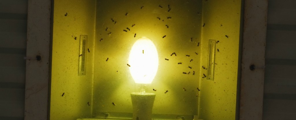 This Is The Type Of Light Bulb To Use If You Want To Avoid Attracting  Insects