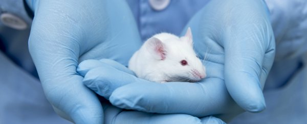 It's Happening: Scientists Can Now Reverse DNA Ageing in Mice