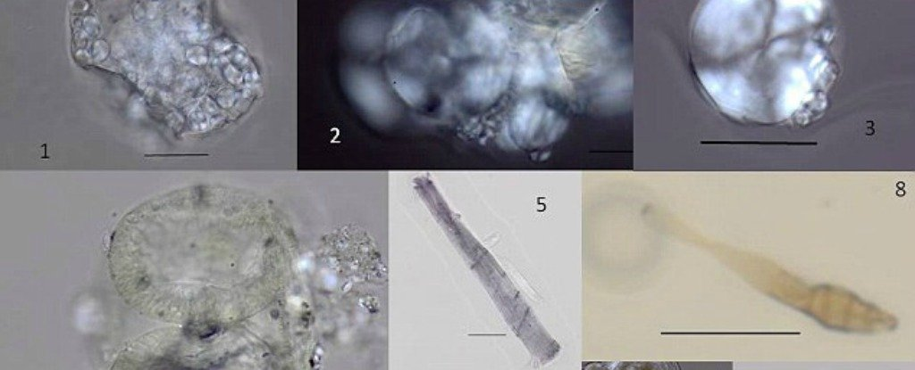 These Microfossils Reveal What Our Ancestors Were Eating 1.2 Million Years Ago