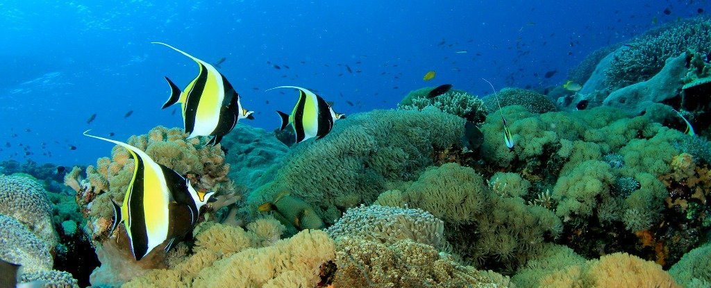 Climate change will move tropical fish closer to the poles for Photos of fish