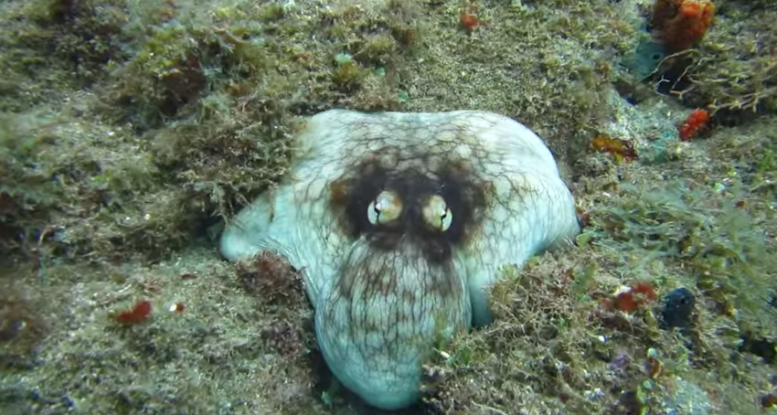 WATCH: An octopus shows off its ridiculous camouflage powers