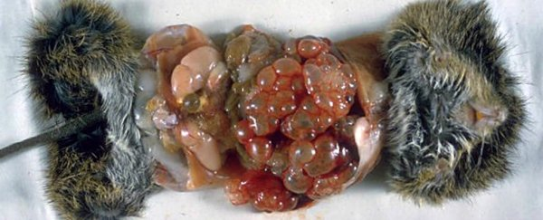 10 Human Parasites >> The Top 10 Parasites That Could Be Lurking In Your Food