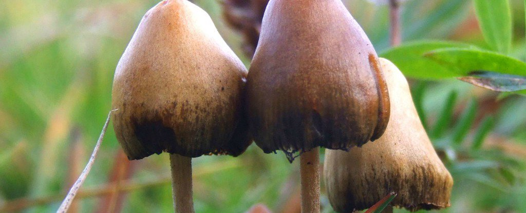 Here's What Magic Mushrooms Do to Your Body And Brain