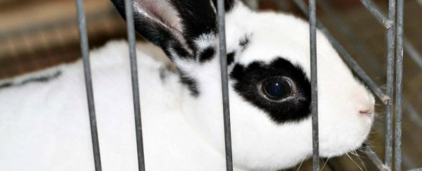 Maths is getting closer to replacing animals in cosmetic testing