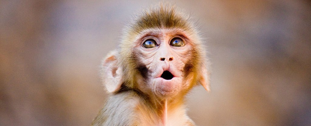 A New Antibody Therapy Appears to Have Permanently Blocked HIV Infection in Monkeys