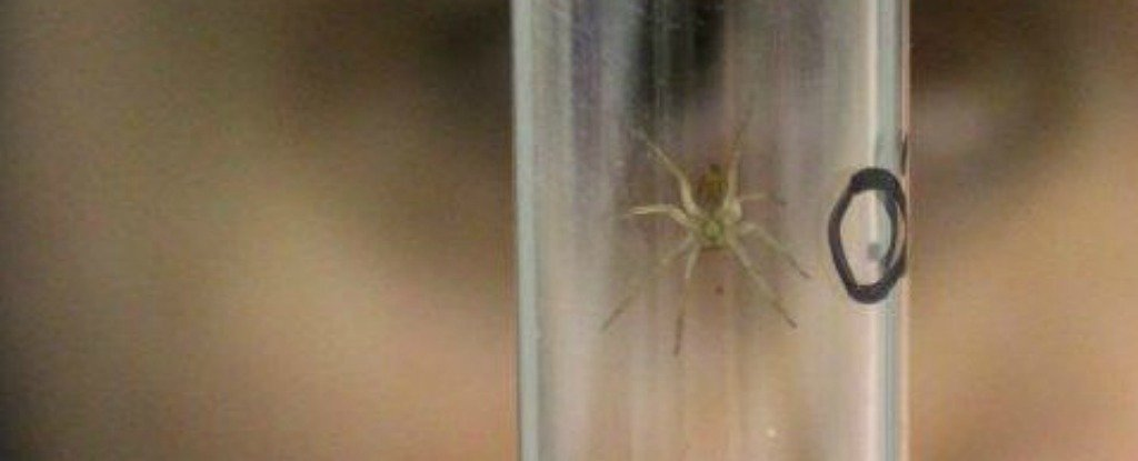 A UK Zoo Has Been Releasing Hundreds of Huge Spiders Into The Wild