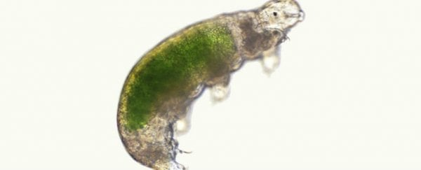 We finally have footage of tardigrade mating, and it's even weirder than expected