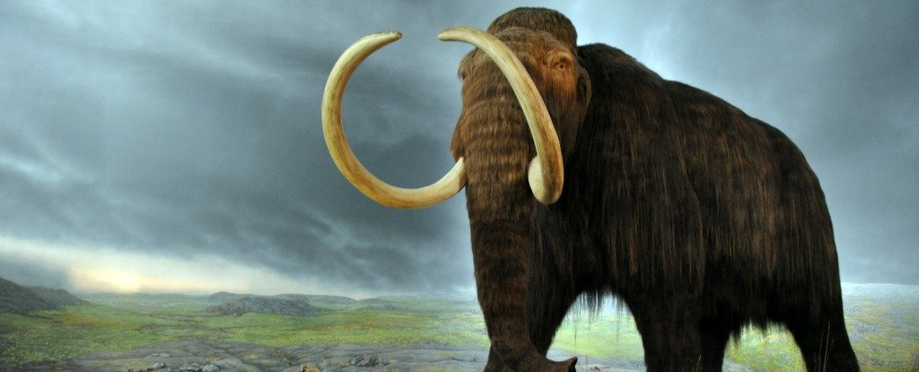 Scientists Might Have Finally Figured Out What Killed Off The Last Woolly Mammoths