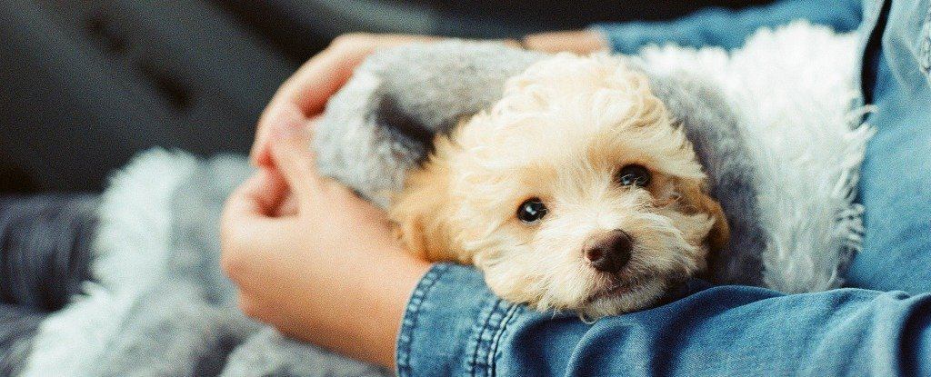 People Really Do Love Dogs More Than Humans, Says New Study