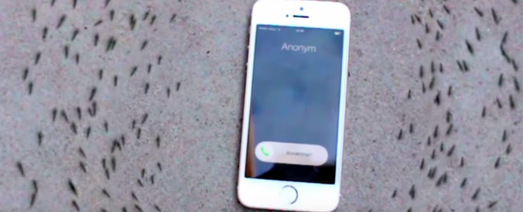 Watch: Ants Form an Eerie Circle Around a Ringing IPhone