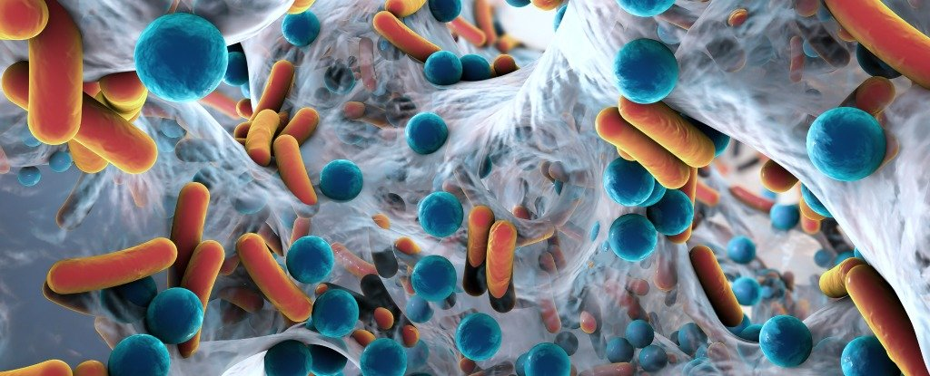 Evidence Suggests Early Exposure to Antibiotics Might Lead to Long-Term Behavioural Changes
