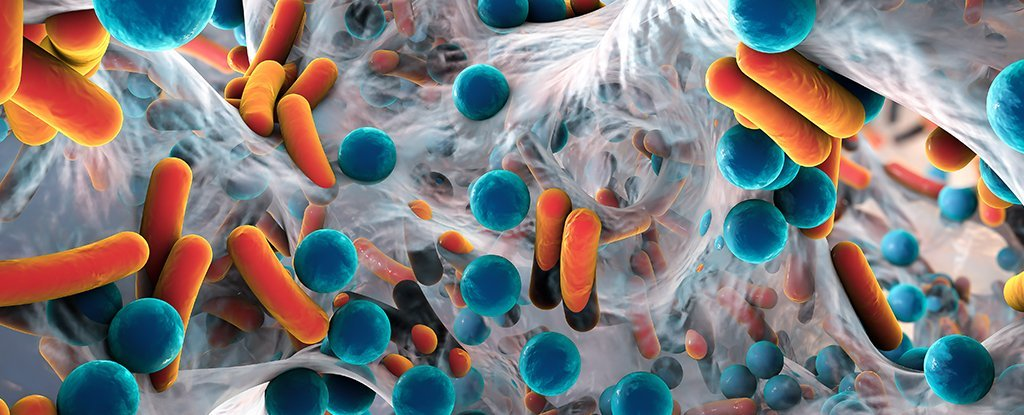 Even More Evidence Has Linked Parkinson's Disease to Our Gut Bacteria