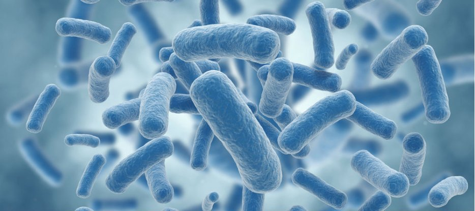 The use of the genetically modified pseudomona bacteria