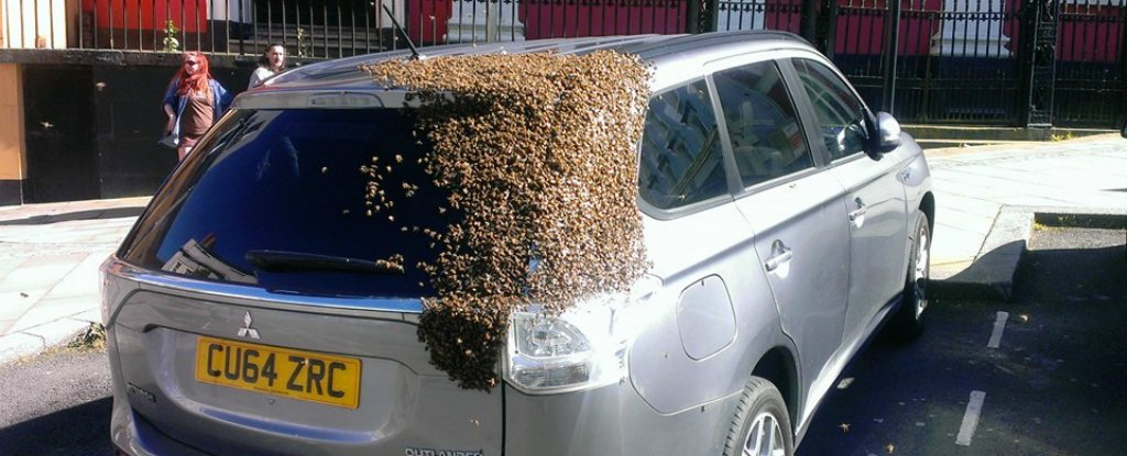 Thousands of Bees Chased This Car For 2 Days Looking For Their Queen