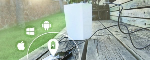 This pot plant can charge your phone through photosynthesis