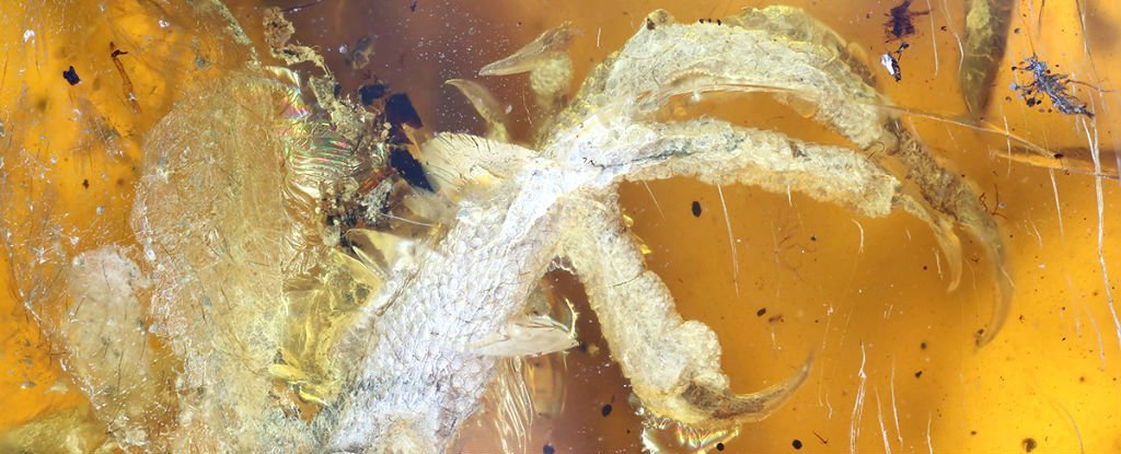 This 100-Million-Year-Old Bird Trapped in Amber Is The Best We've Ever Seen