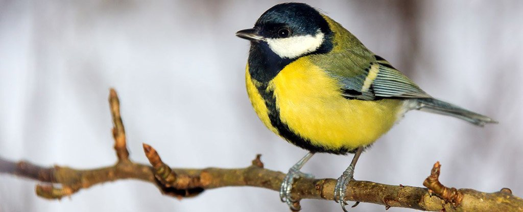 This Bird Could Actually Be Evolving to Eat From Bird Feeders