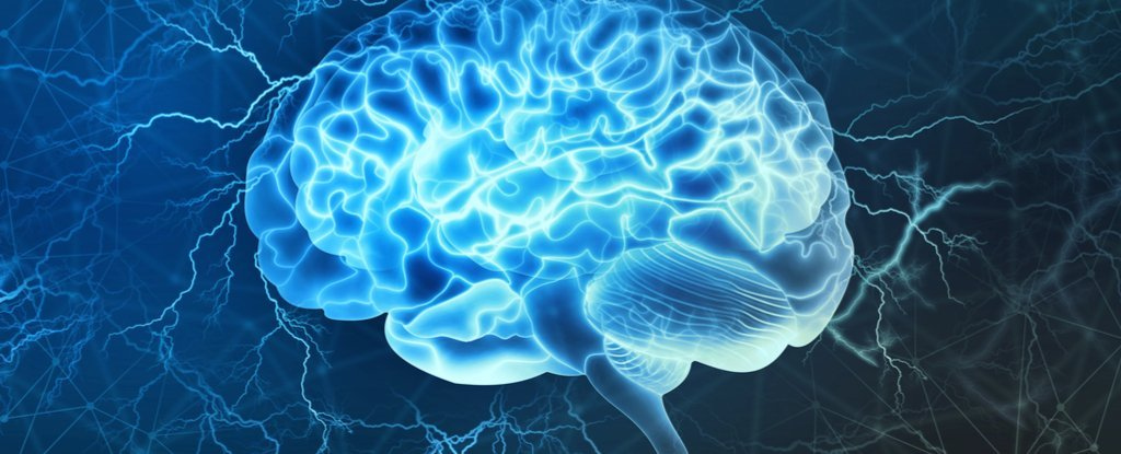 Researchers Have Discovered a Previously Unknown Role For The Brain's Hippocampus