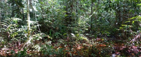An uncomfortably large carbon deposit has been discovered in the Congo