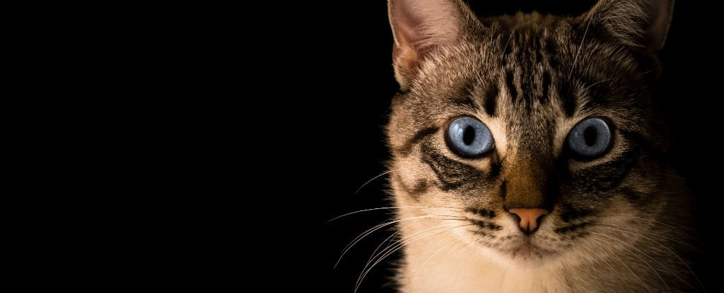 There's Little Evidence That The Infamous 'Cat Parasite' Causes Psychological Changes in Humans, Study Finds