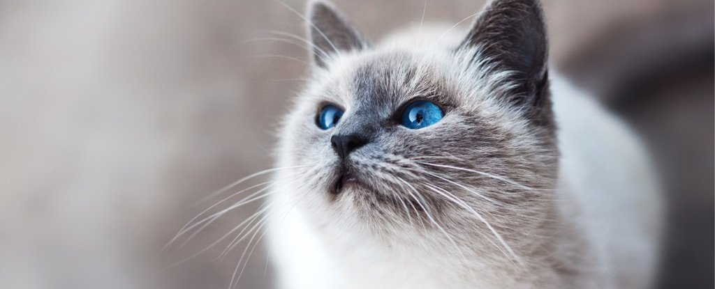 Ancient DNA Shows How Cats Took Over The World