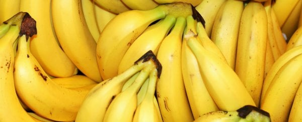 Watch: The terrifying truth about bananas