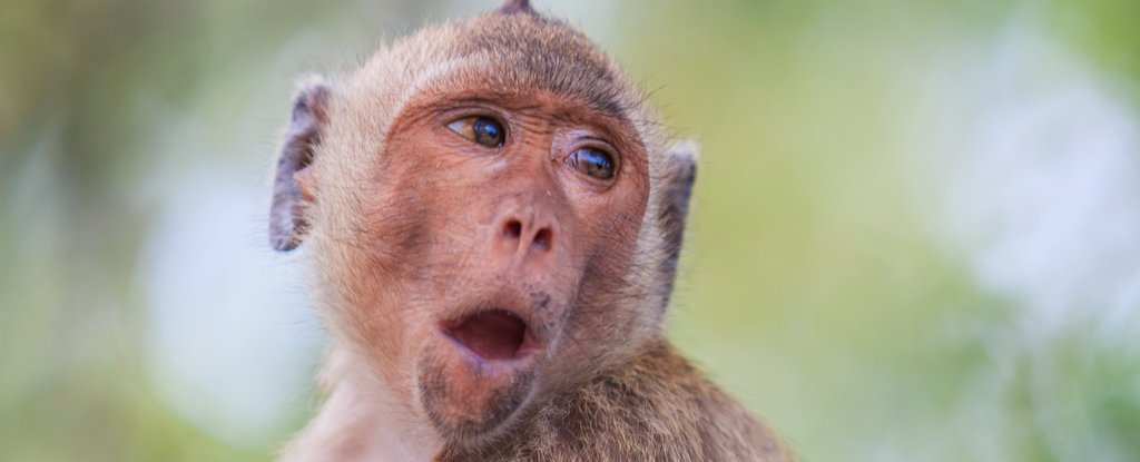 Why Can't Monkeys Talk?