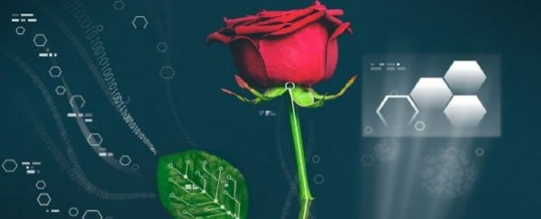 World's first cyber-plants fuse electronics with roses