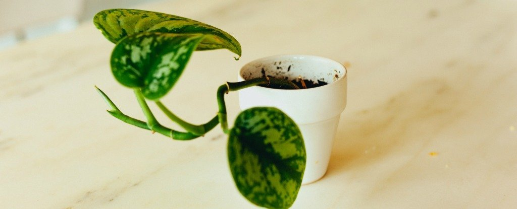 6 Idiot-Proof Houseplants That Can Live For Weeks Without Water