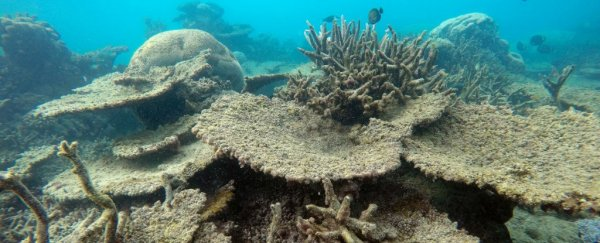 The Great Barrier Reef has suffered the worst die-off ever recorded
