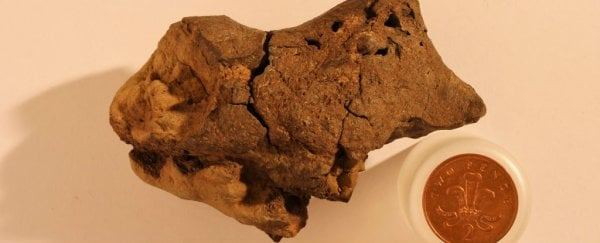 Archaeologists have found the first ever fossilised dinosaur brain, and it's surprisingly complex