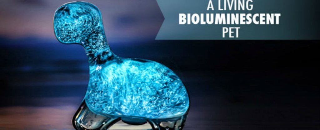 Watch New Dino Pet Tank Glows With Bioluminescent