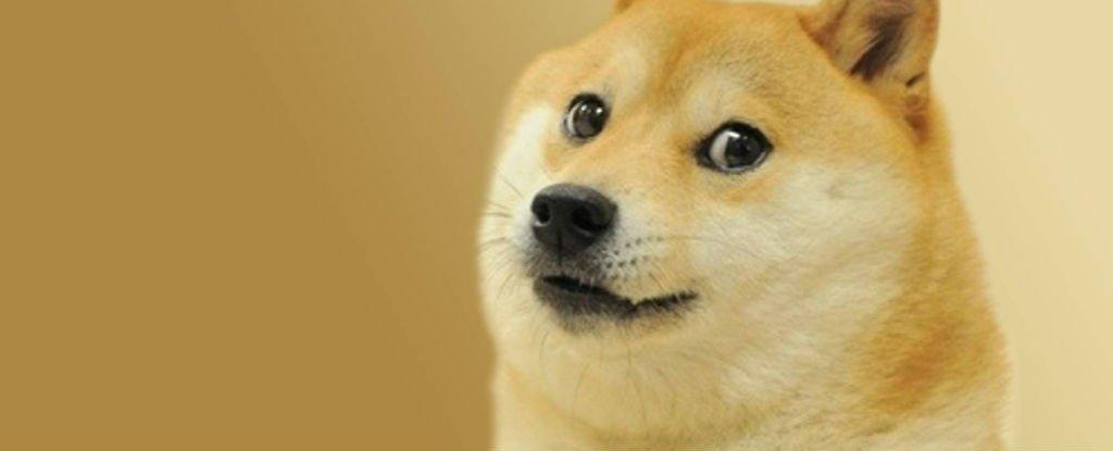 doge hund